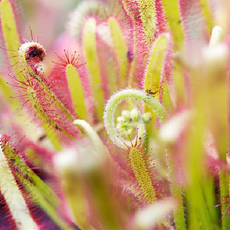 Plantas carnívoras, plantas asesinas