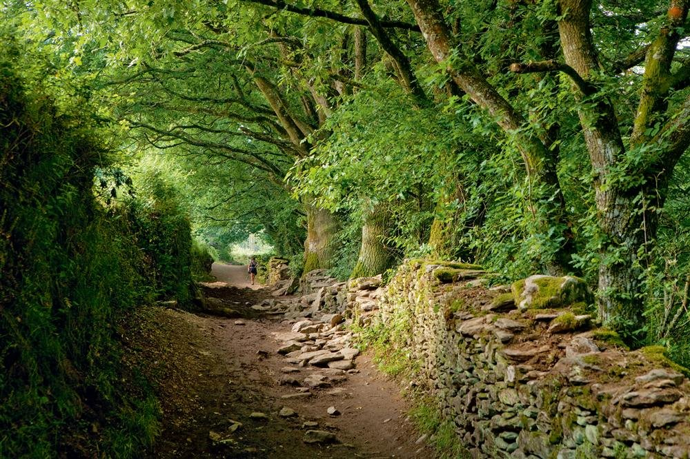 A05-997217. Caminos de Santiago de Compostela: Camino francés y Caminos del Norte de España