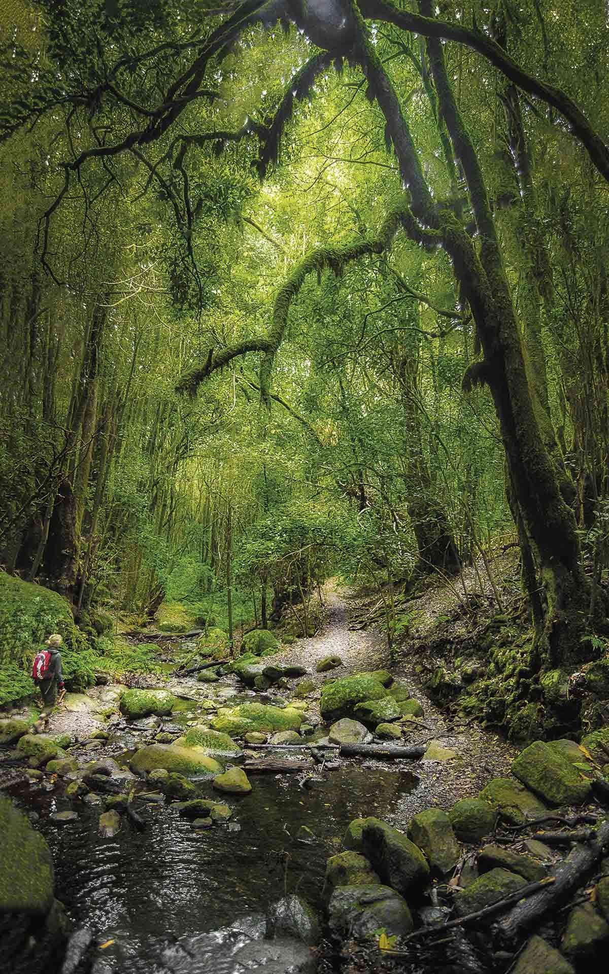 DSC1054. Parque Nacional de Garajonay