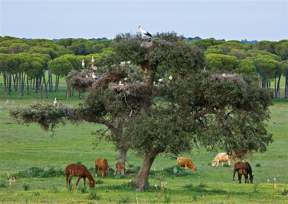 fototeca9x12-771868. Parque Nacional de Doñana(1994, 2005)