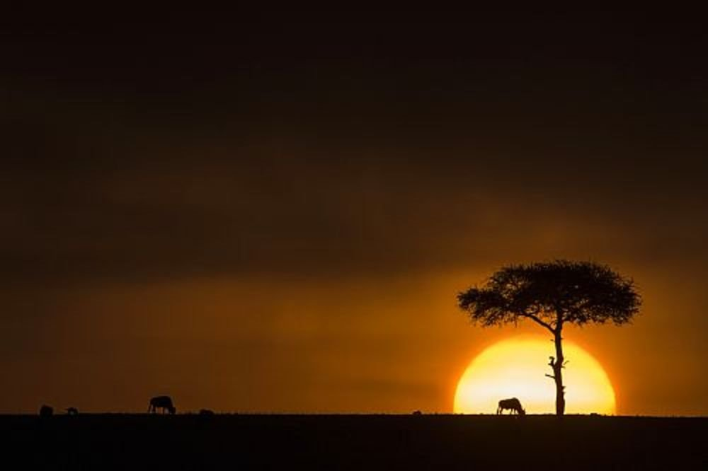 "Parque Nacional de Masai Mara, Kenia. ""Cinco viajes al infierno"", Marta Gellhorn"