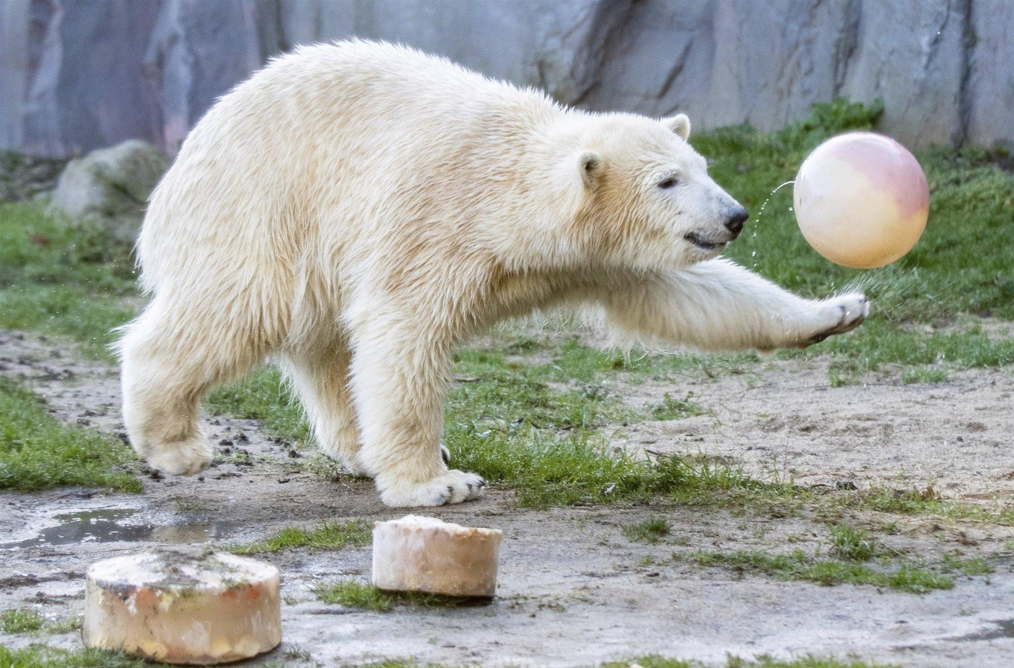 Imagenes De Osos Polares: Reportajes Y Fotografías De Osos En National Geographic