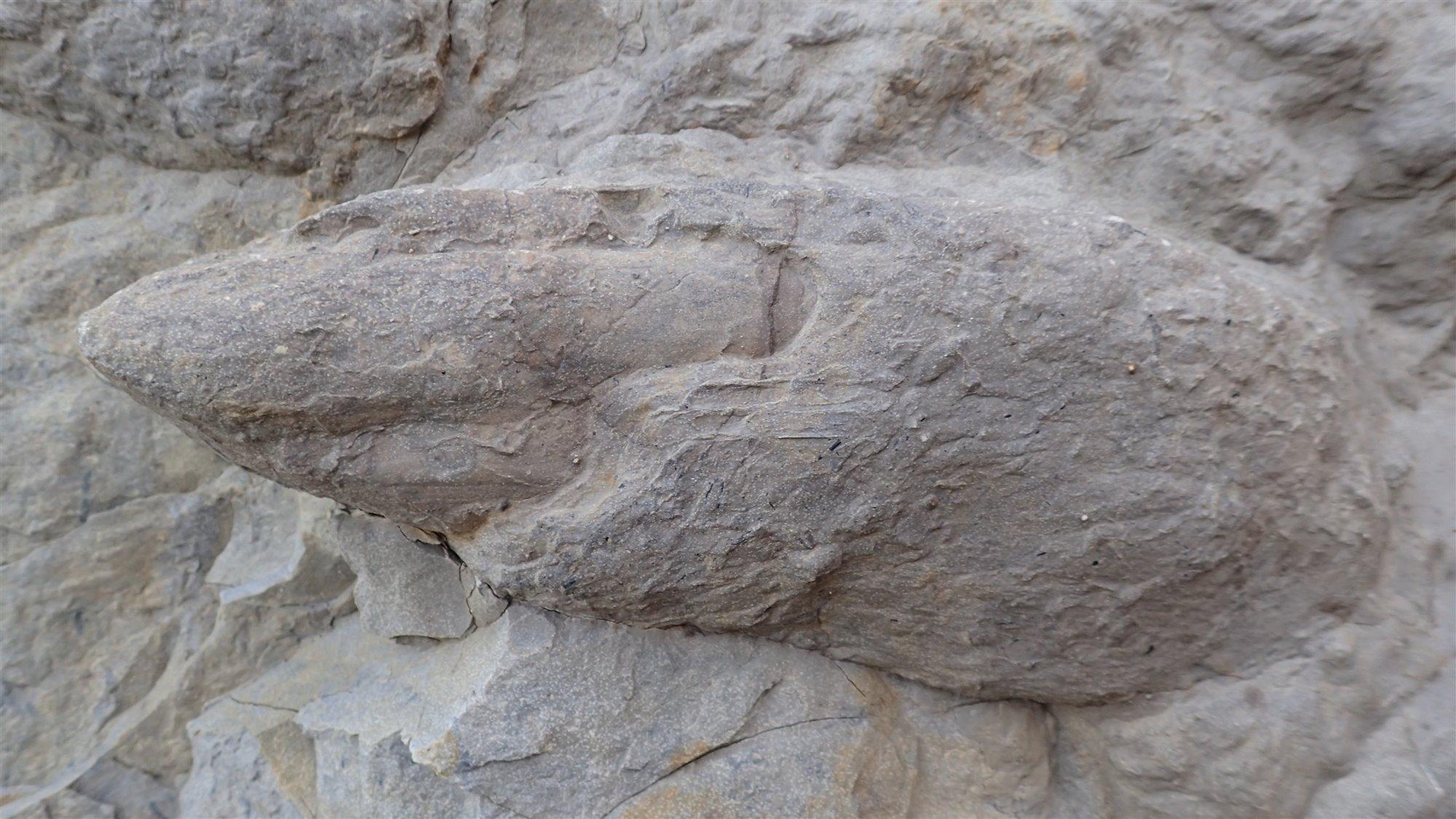 huellasdedinosaurios. Huellas de dinosaurios