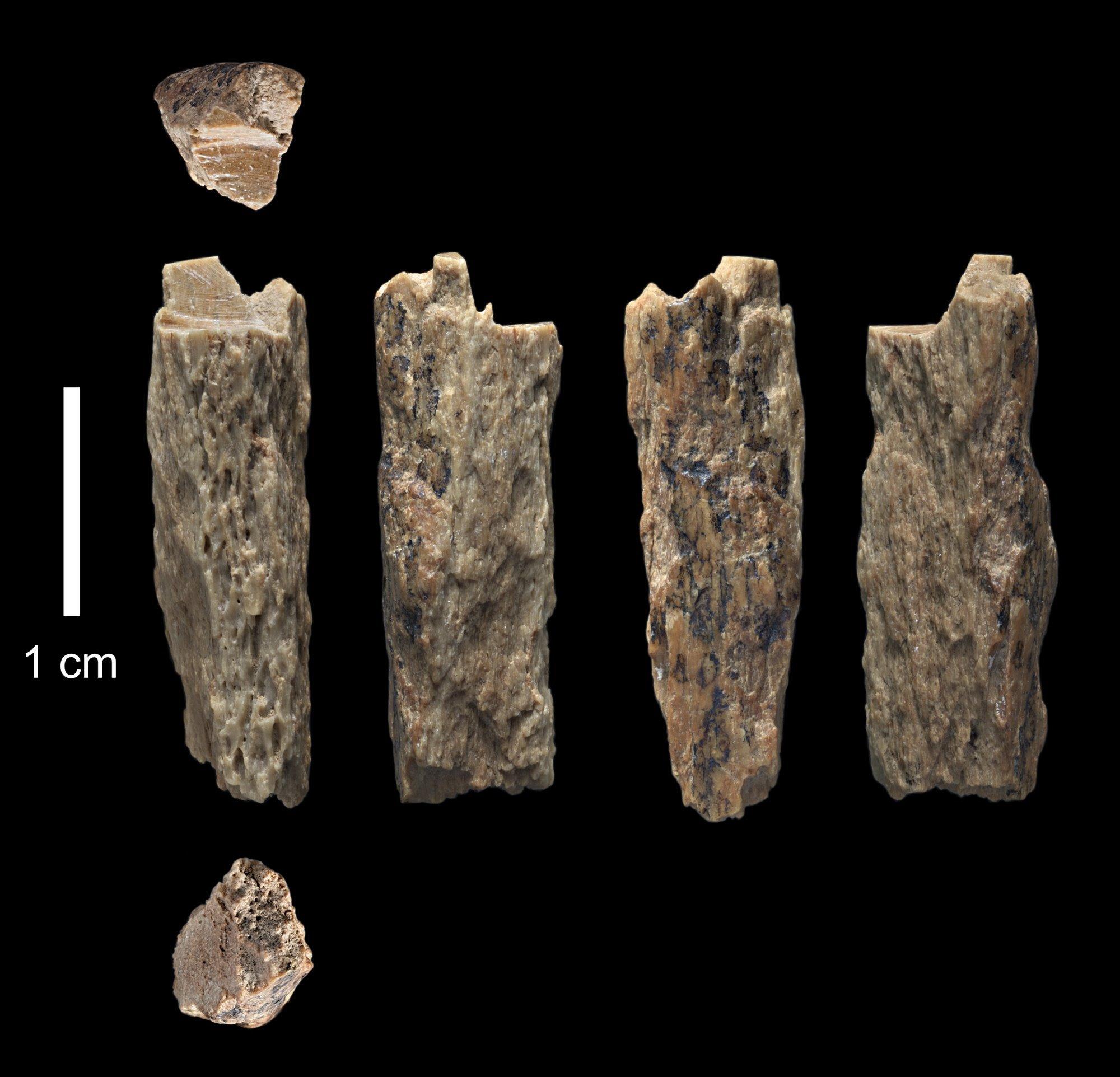 denisova11. De madre neandertal y de padre denisovano