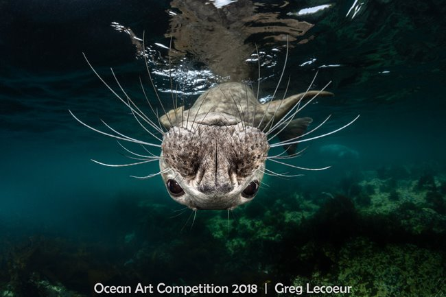 Grey Seal Face