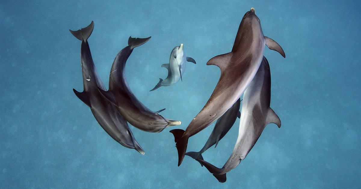 La inteligencia de los delfines