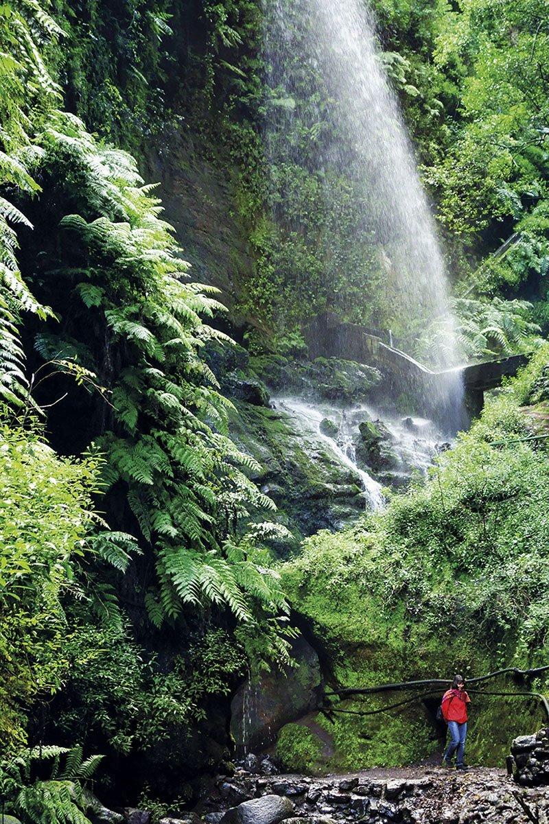 Los Tilos - La Palma - Islas Canarias. La Palma, Reserva de la Biosfera