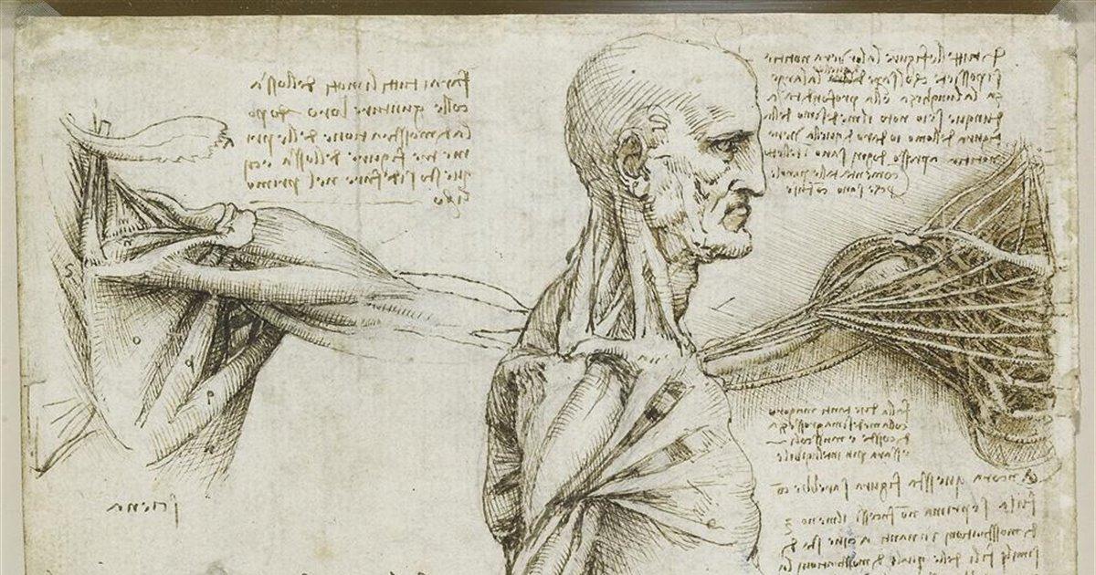 Resultado de imagen de leonardo da vinci anatomia