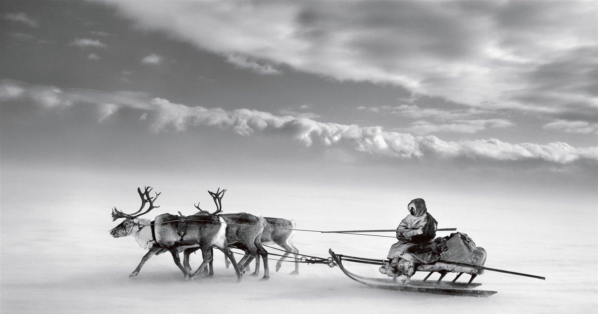 Nenets, el pueblo nómada de Siberia.  Conformado por unos 40.000 pastores nómadas