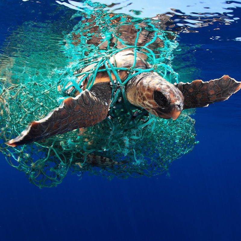 Los océanos, el almacén mundial de CO2