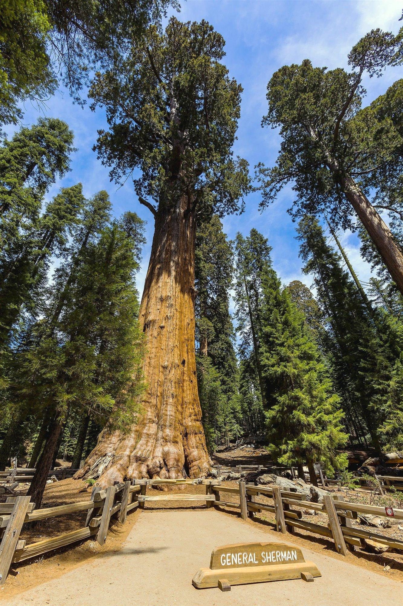 General Sherman, el árbol más grande del mundo