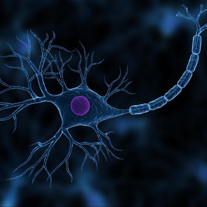 Lucha contra el Alzheimer: el cerebro crea neuronas hasta los 90 años