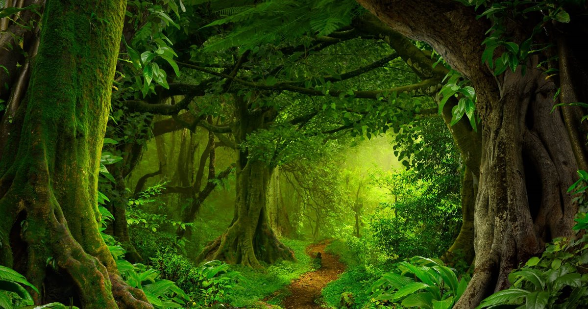 Selva-tropical_daabf8bc_1200x630