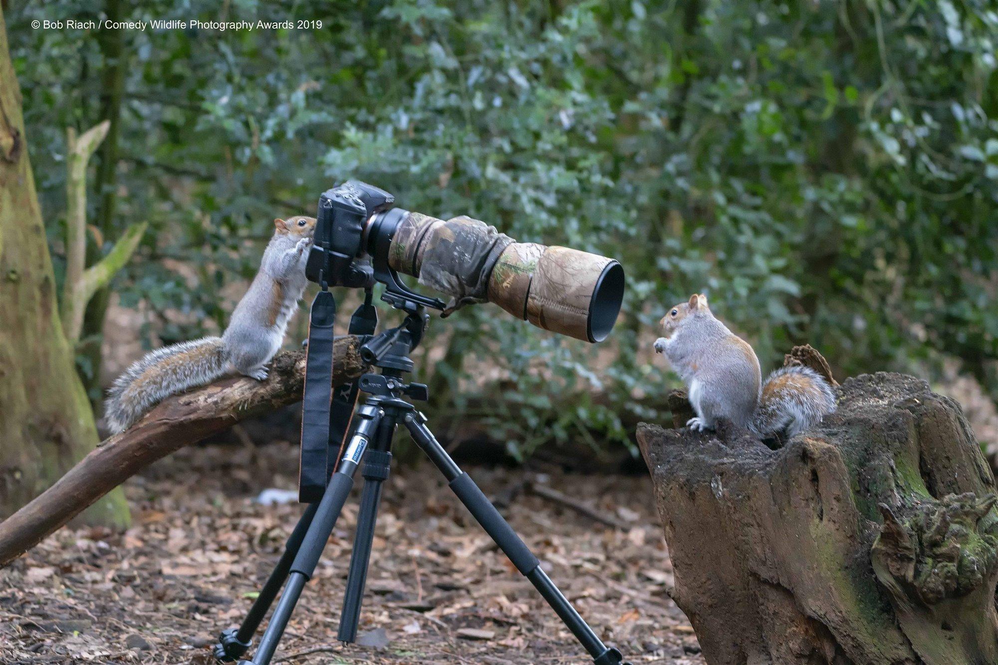 Ardillas fotógrafas