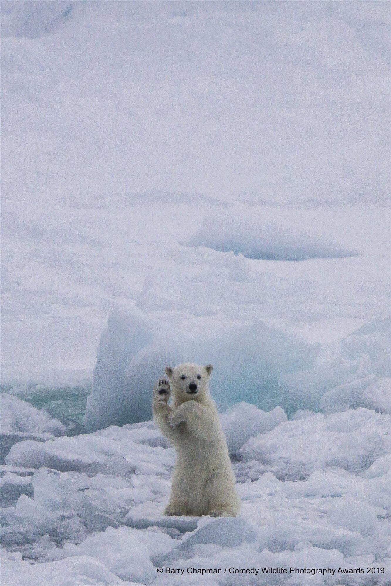 Saludo polar