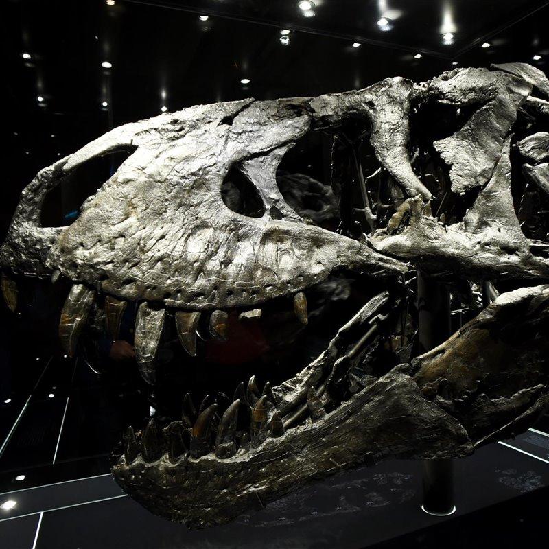 Dinosaurios Noticias Fotos Y Nuevos Fosiles Hoy podemos conocer seis nuevos que veremos en la película. dinosaurios noticias fotos y nuevos