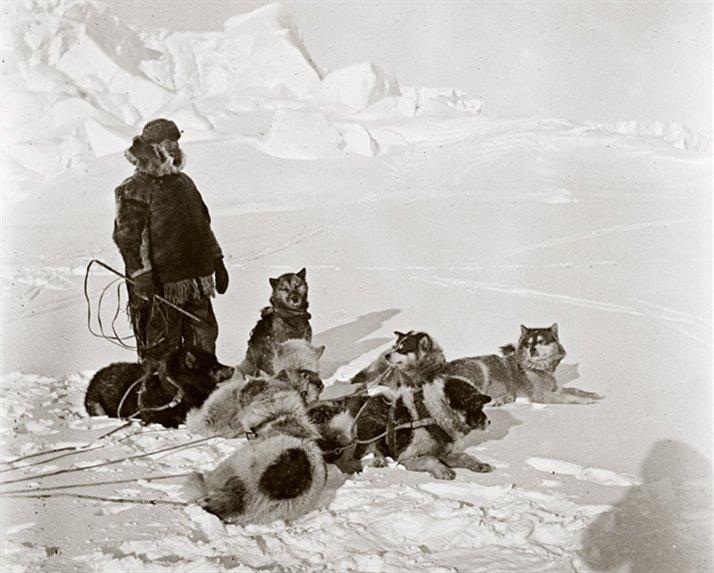 Amundsen en el Ártico. Los perros fueron claves en el éxito de Amundsen