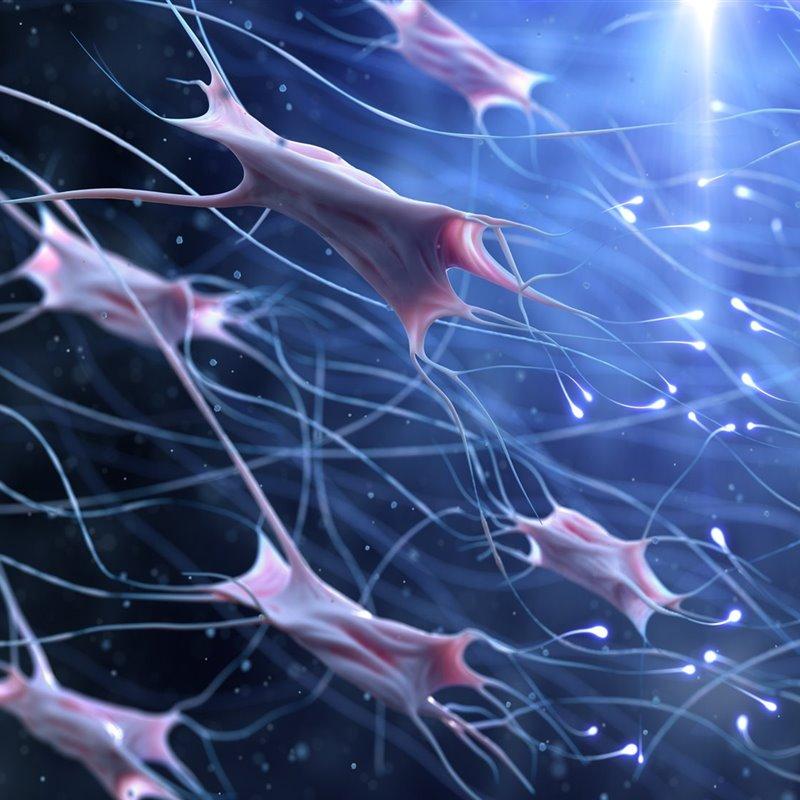 Descubren un nuevo órgano sensorial para el dolor
