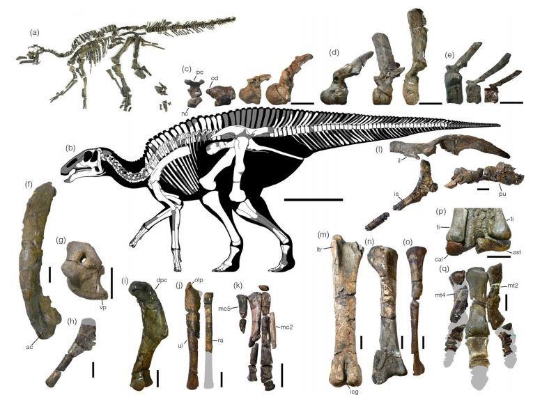 219 Fotos De Dinosaurios Había dinosaurios carnívoros, herbívoros y omnívoros, y muchos evolucionaron para tener dietas especializadas, como. 219 fotos de dinosaurios