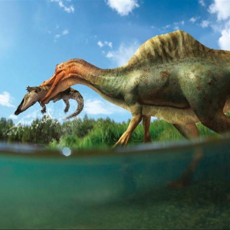 Dinosaurios Noticias Fotos Y Nuevos Fosiles Los dinosaurios del parque cretácico exhiben nuevos y llamativos colores, producto del mantenimiento rutinario y en base a nuevos descubrimientos sobre. dinosaurios noticias fotos y nuevos