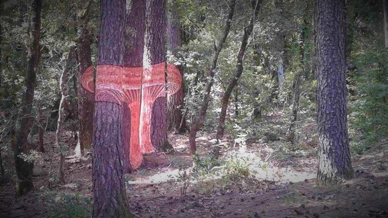 Níscalo (Lactarius deliciosus) pintado sobre varios árboles cerca del dispositivo experimental de la UdL y el CTFC en el bosque de Poblet (Tarragona). Foto: Sergio de Miguel Magaña