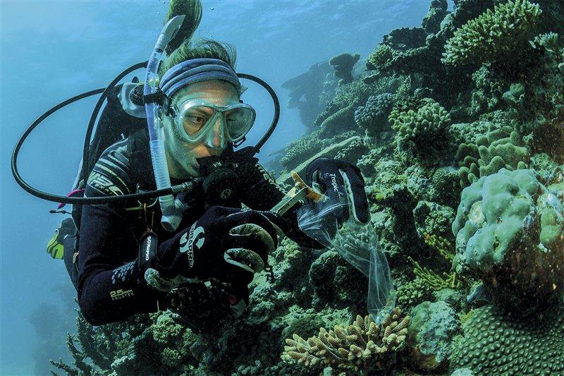 La bióloga Emma Camp identifica las especies más resistentes en el Gran Arrecife de Barrera de Australia.
