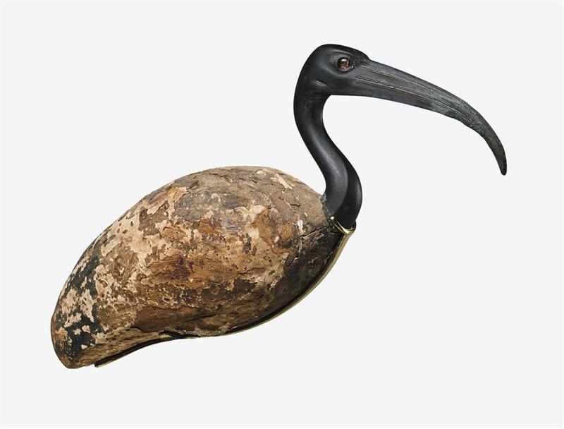 El ibis, animal asociado a Toth, personificó el poder mental del dios solar Re, la sabiduría, las ciencias y las letras. El de la imagen es del período ptolemaico.