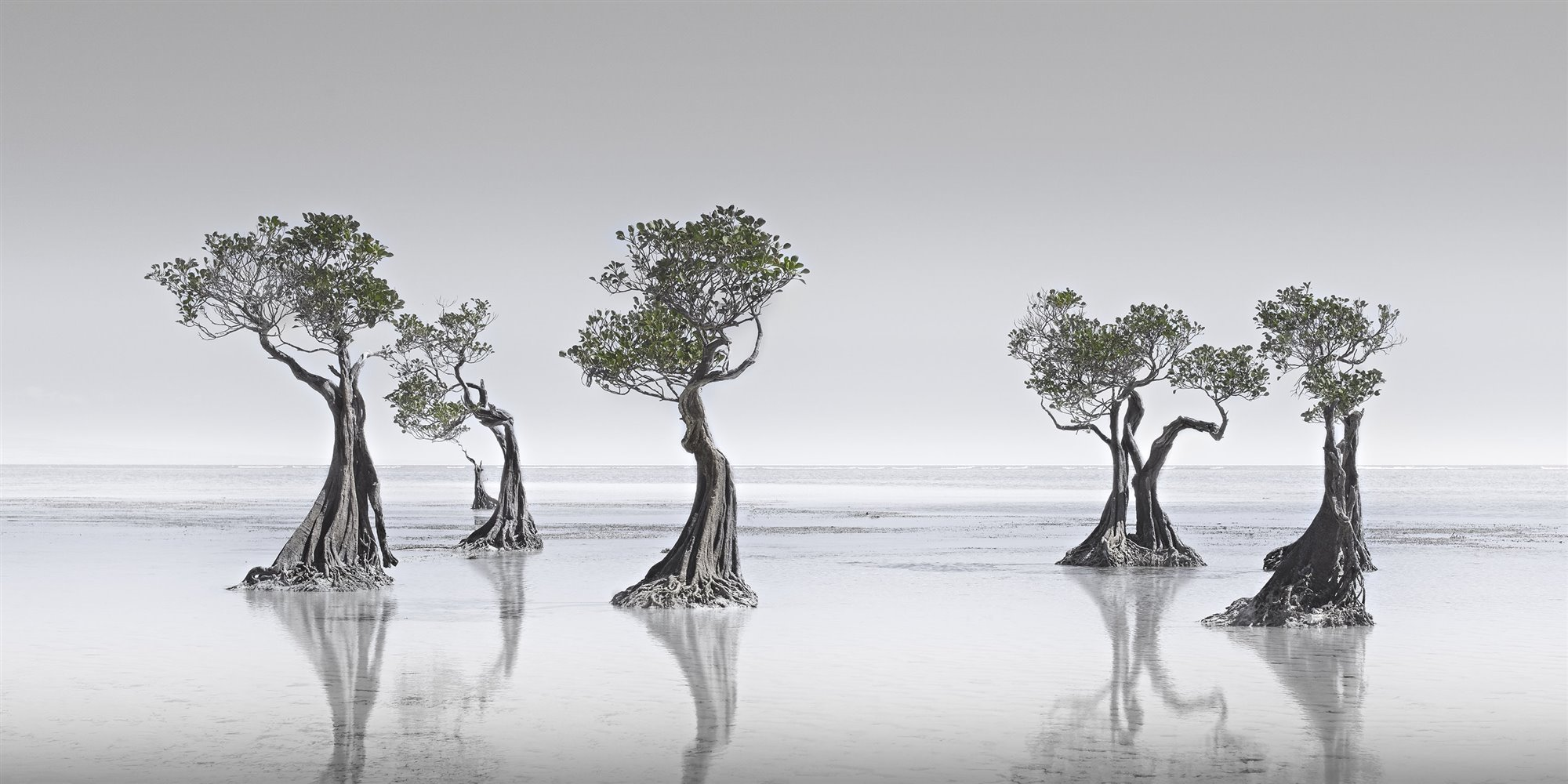 Dancing Mangroves