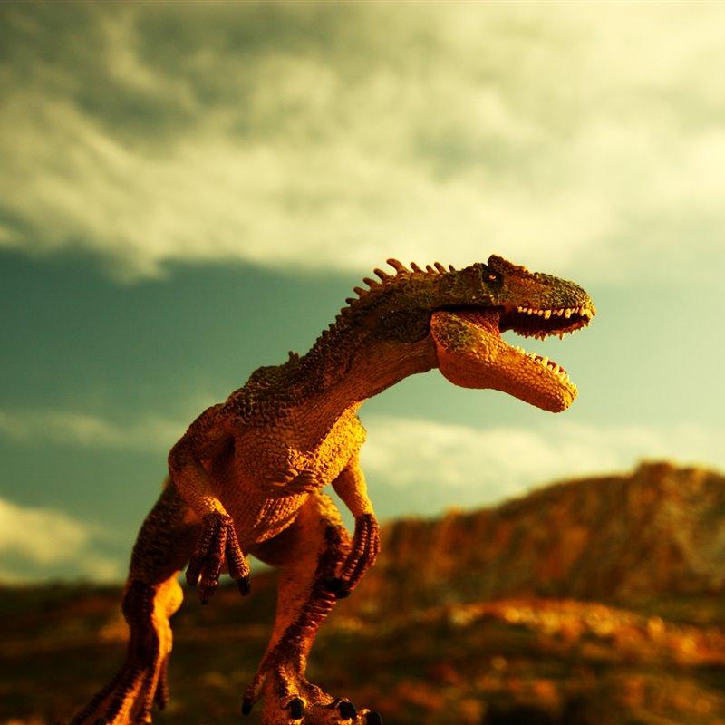 Reportajes Y Fotografias De Tyrannosaurus Rex En National Geographic Una de las partes más espectaculares del tiranosaurio es su cabeza. tyrannosaurus rex en national geographic