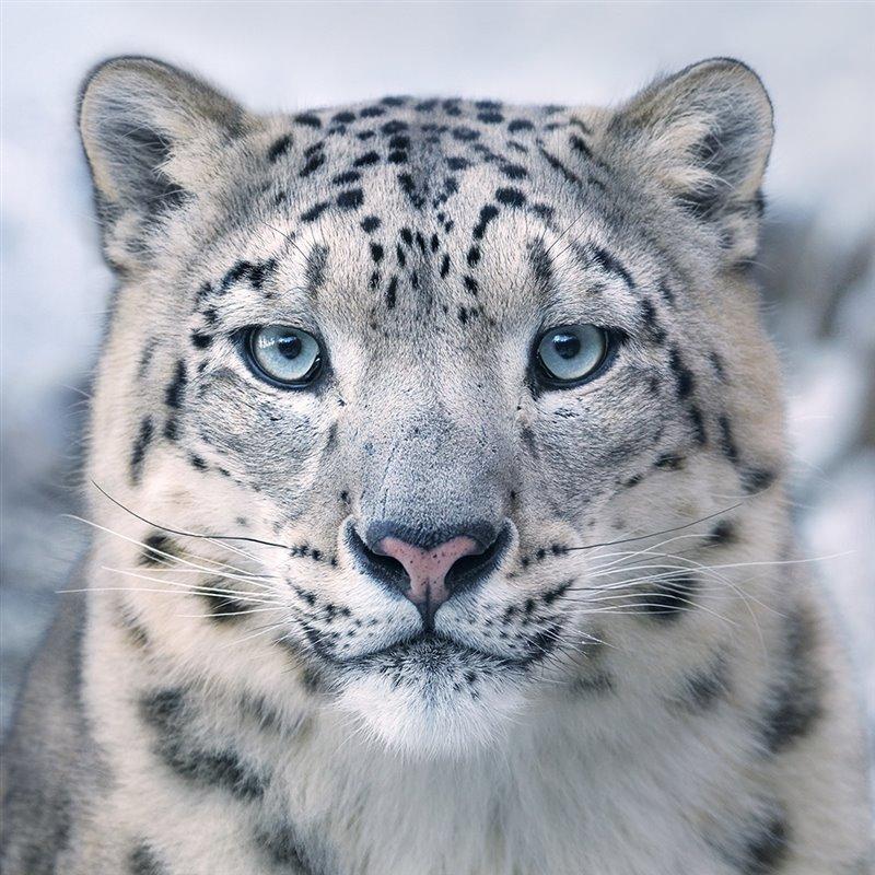 Animales en peligro de extinción - cover