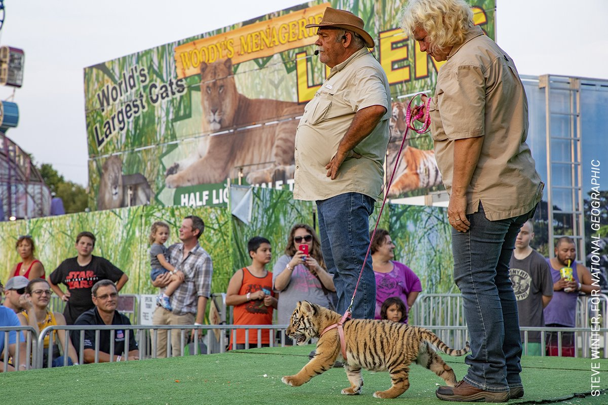 The Tigers Next Door III (Los tigres de al lado III)