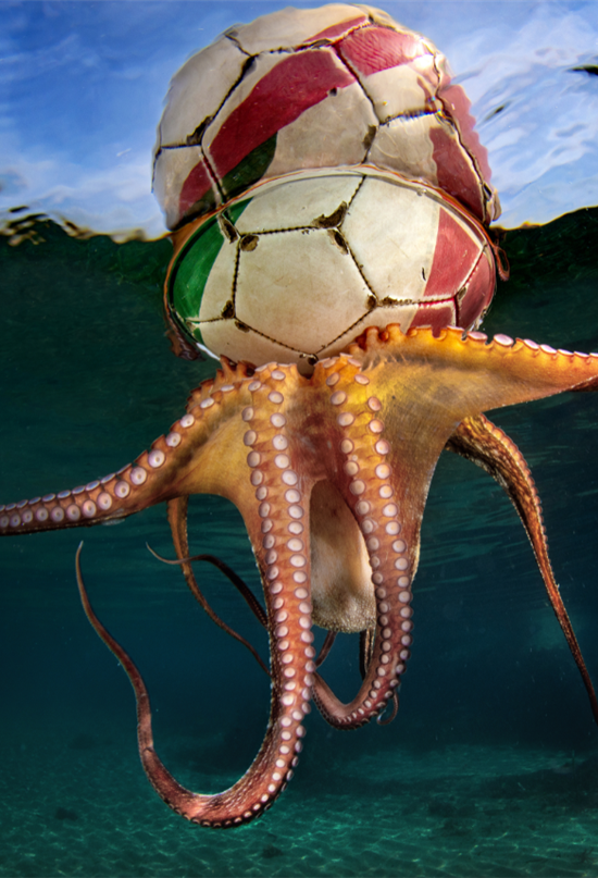 Octopus Training