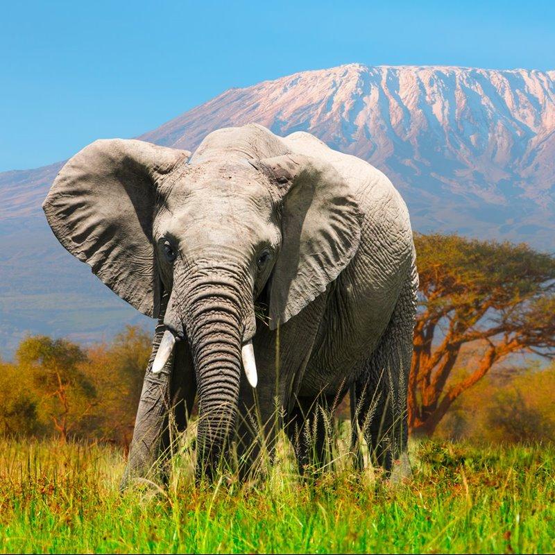 Elefantes - Fichas de animales en National Geographic