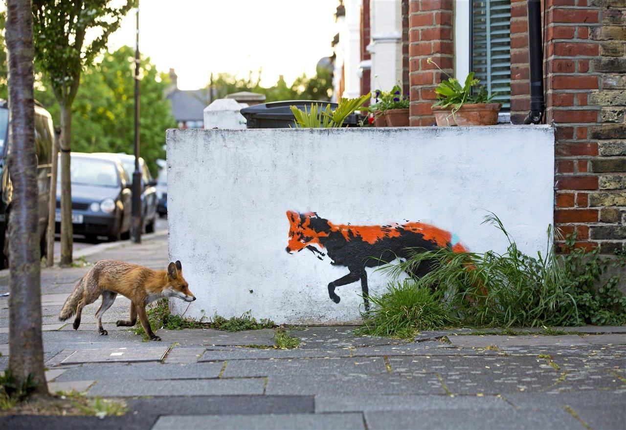 Un zorro pasea tranquilamente por Londres.