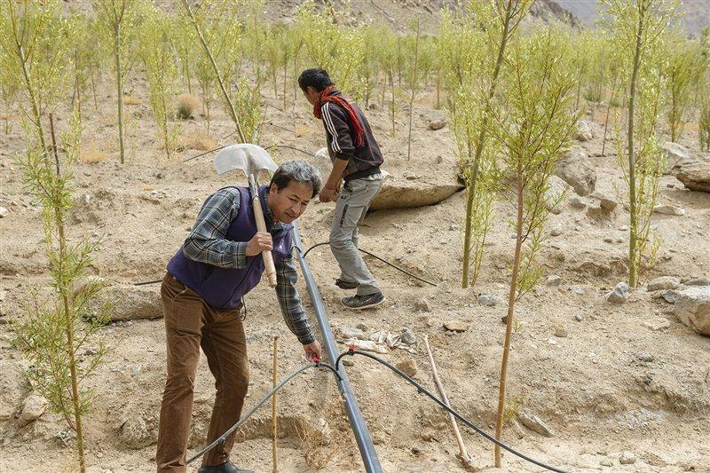 Sonam Wangchuk (con la pala al hombro) participa en una plantación de árboles jóvenes que beberán del agua que les brinda la estupa de hielo.