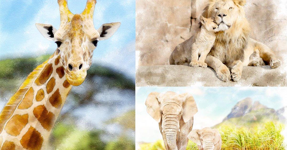Mosaico-fondo-pantalla-animales_bc350896_1200x630