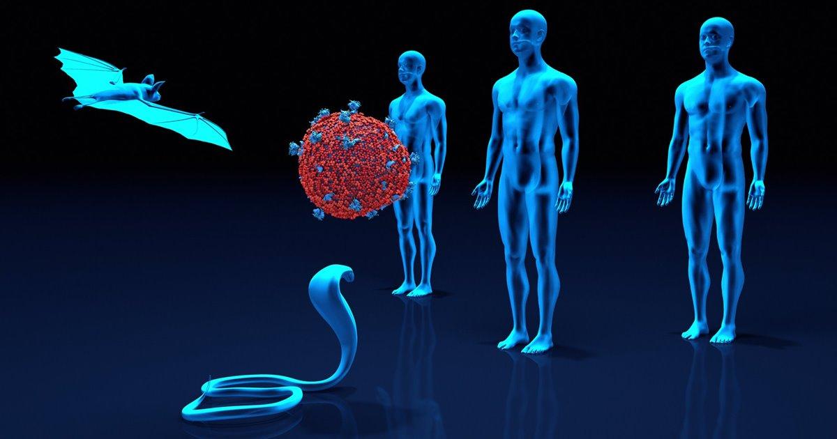 Cómo pasan los virus de los animales a los humanos