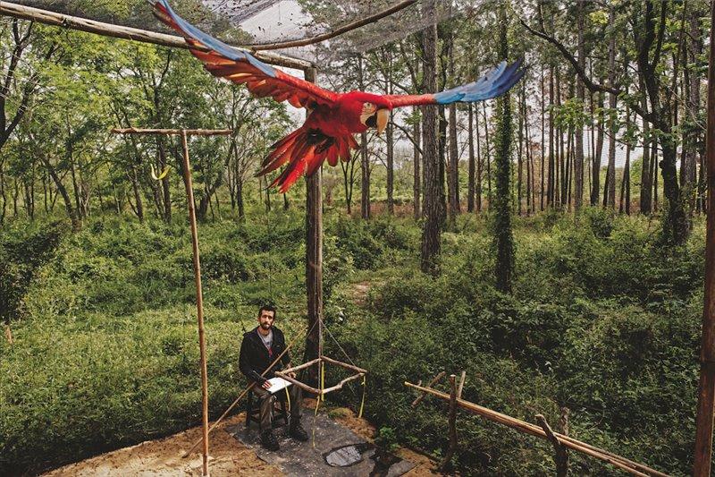 El veterinario Jorge Gómez supervisa el entrenamiento de un guacamayo aliverde antes de su suelta en el Parque Iberá, en Argentina. Esta especie, que llevaba un siglo sin ser avistada en la región, va a reintroducirse en la zona, por lo que se enseña a las aves criadas en cautividad las destrezas que necesitarán para sobrevivir en un entorno natural.