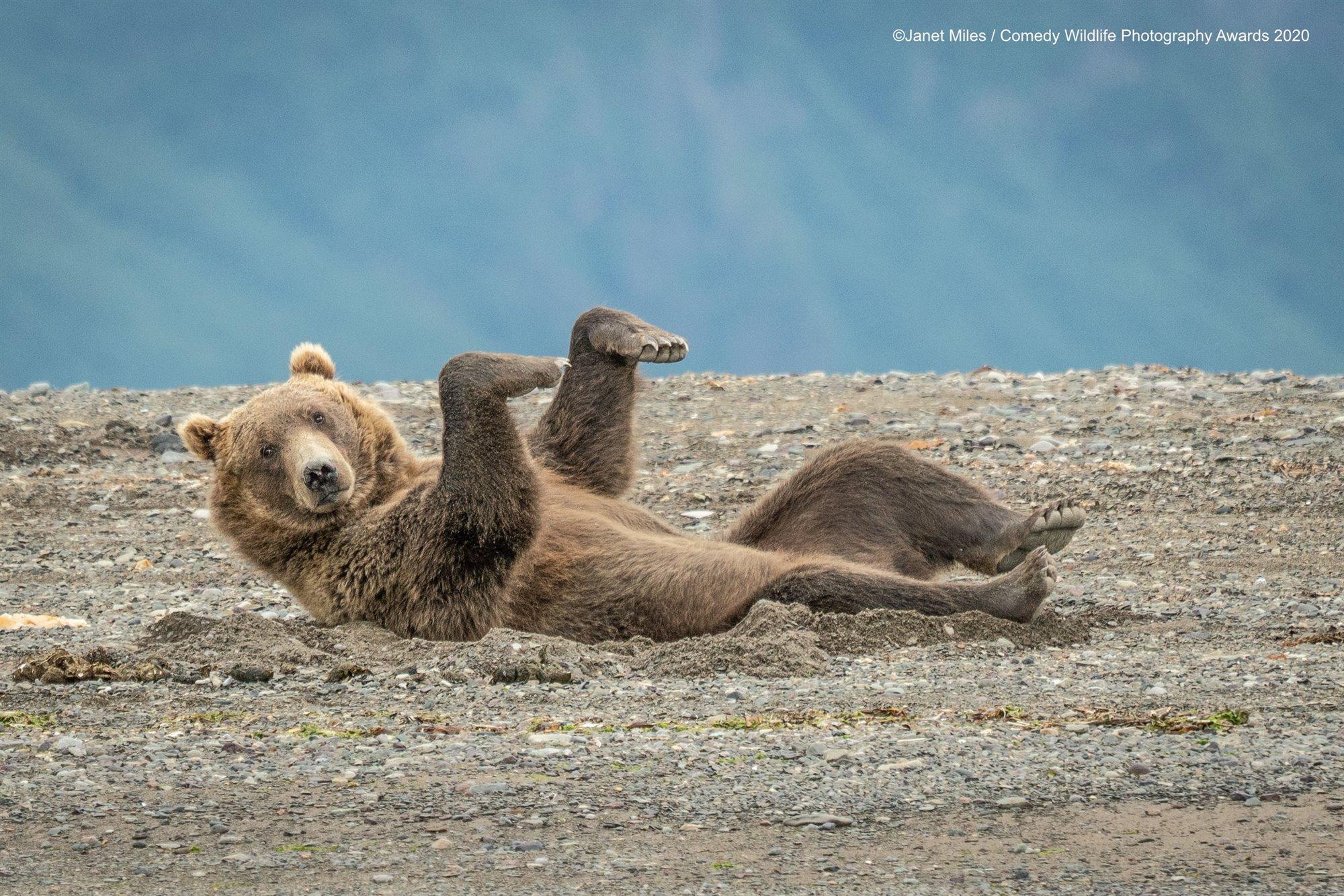 La danza del oso