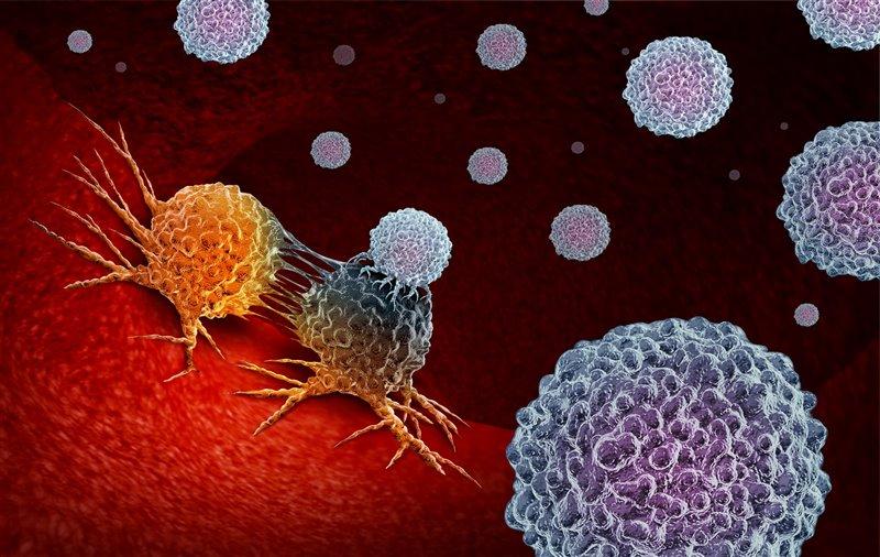 Algunas células cancerosas logran desarrollarse porque a veces consiguen esconderse de las defensas de nuestro cuerpo.
