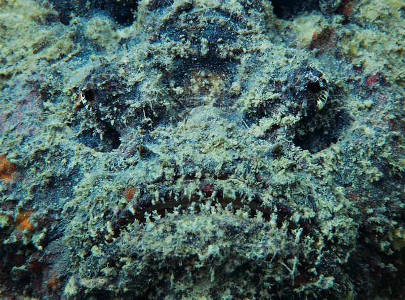 05-venomous-krait-victim
