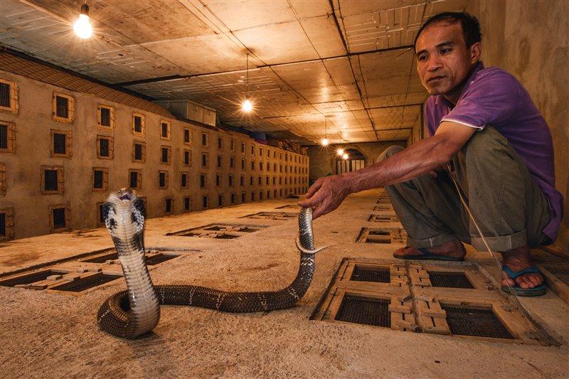 07-venom-spitting-cobra