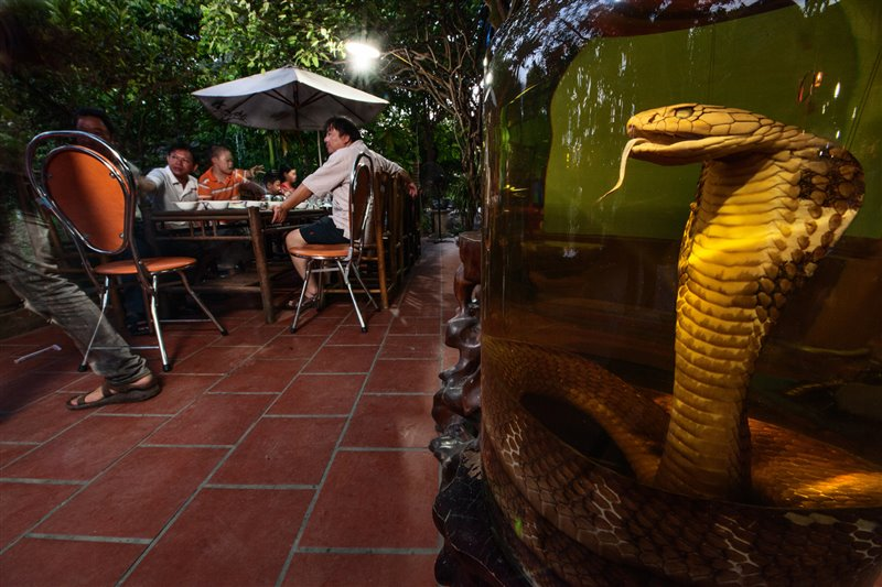 11-king-cobra-drink-special-vietnam