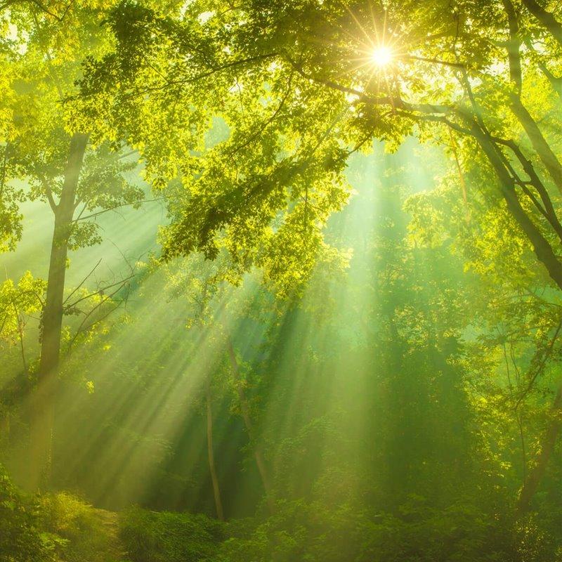Bosque iluminado por la luz solar