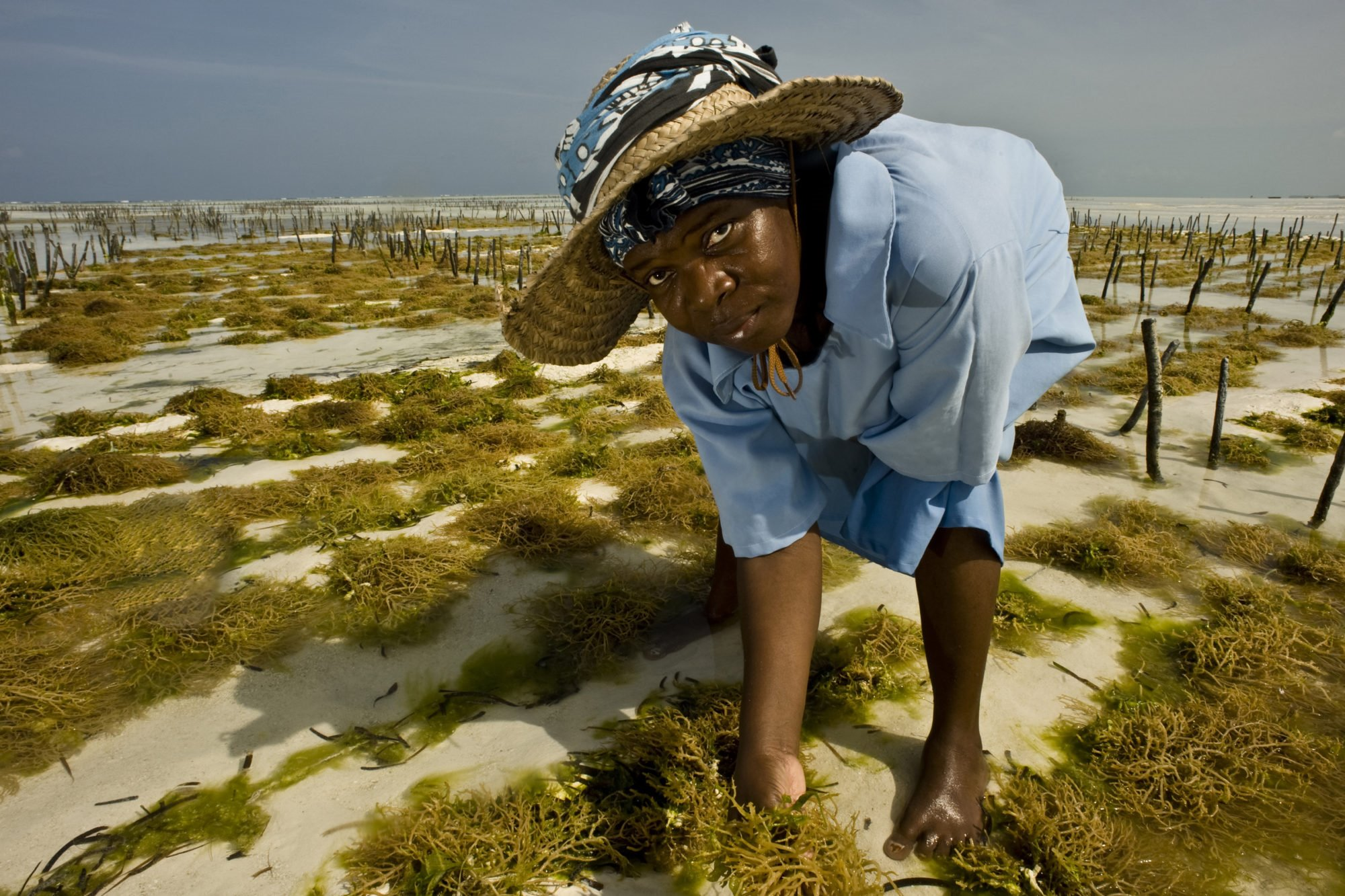 Sea Weed Cultivation
