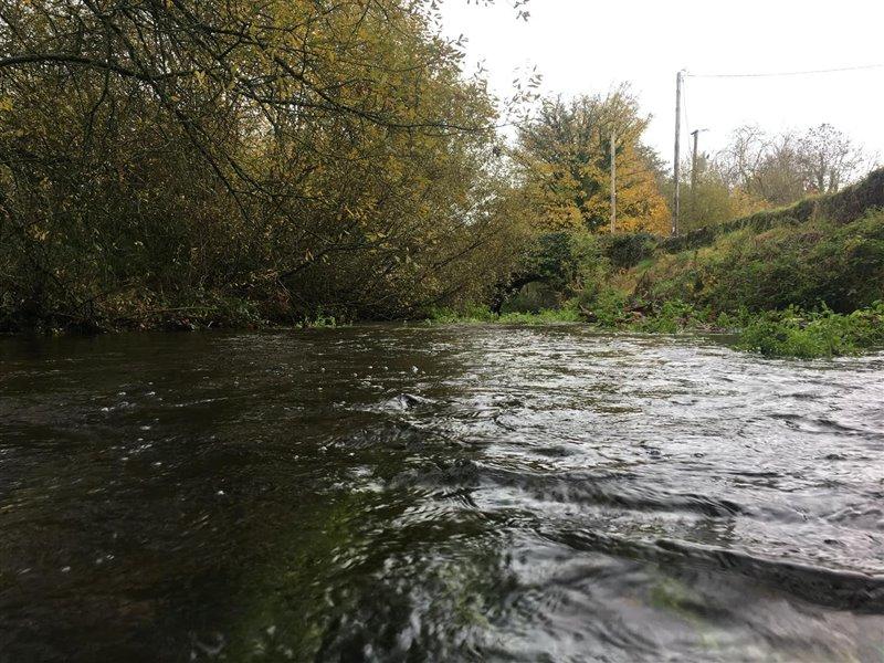Los anfípodos 'Gammarus duebeni' se encuentran en arroyos irlandeses como este en Cork.