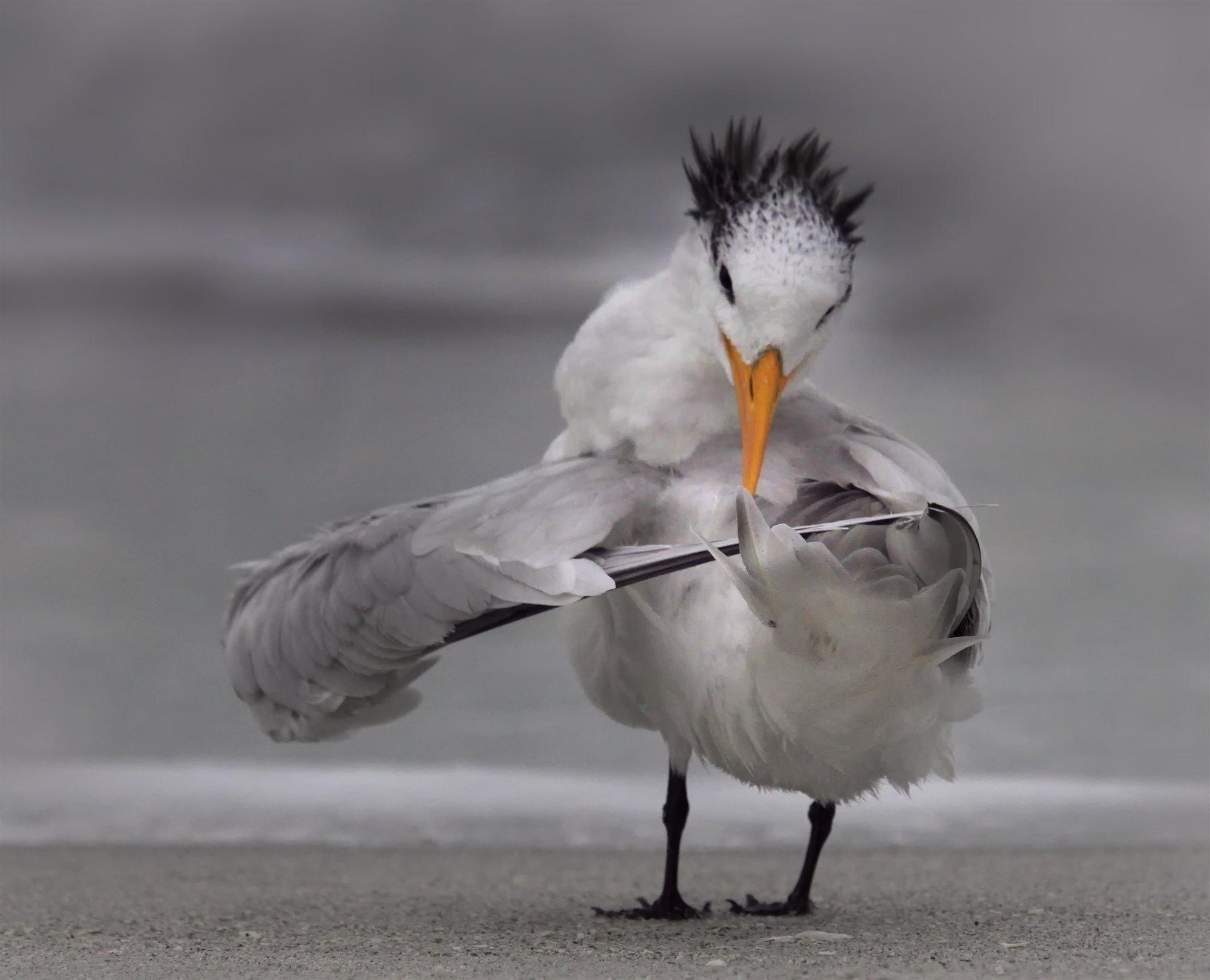 Afilando las plumas