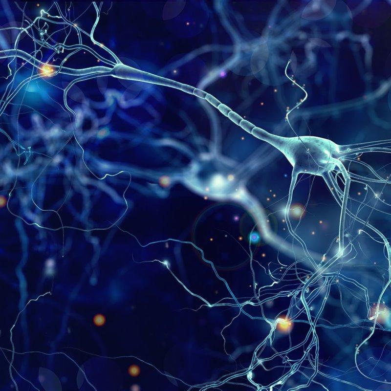 Representación de la interconexión entre neuronas.