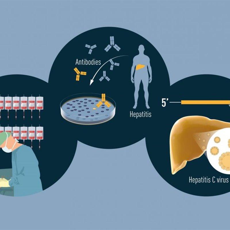 Premio Nobel de Medicina al descubrimiento del virus de la hepatitis C