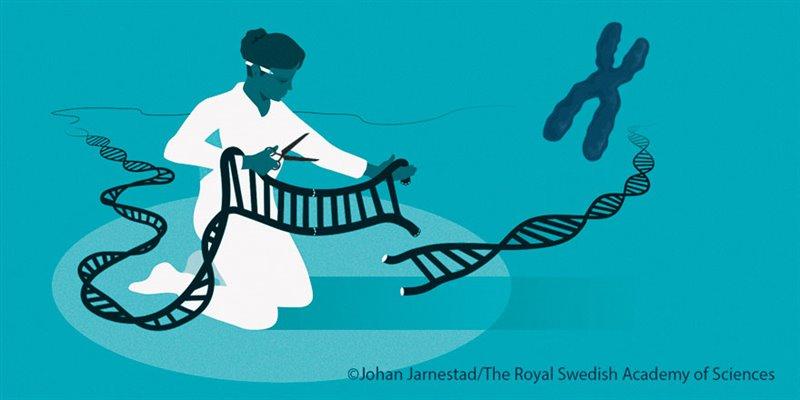 El conocido como corta-pega genético ha revolucionado el mundo de la medicina
